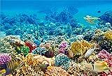 BuEnn 10x7ft Bunte Unterwasser Korallen Rock Fische Hintergrund für Fotos Parteien Blau Wasser Pflanzen Ozean Aquarium Aquarien Szene Fotografie Hintergrund Video Vorhänge Fotostudio Requisiten