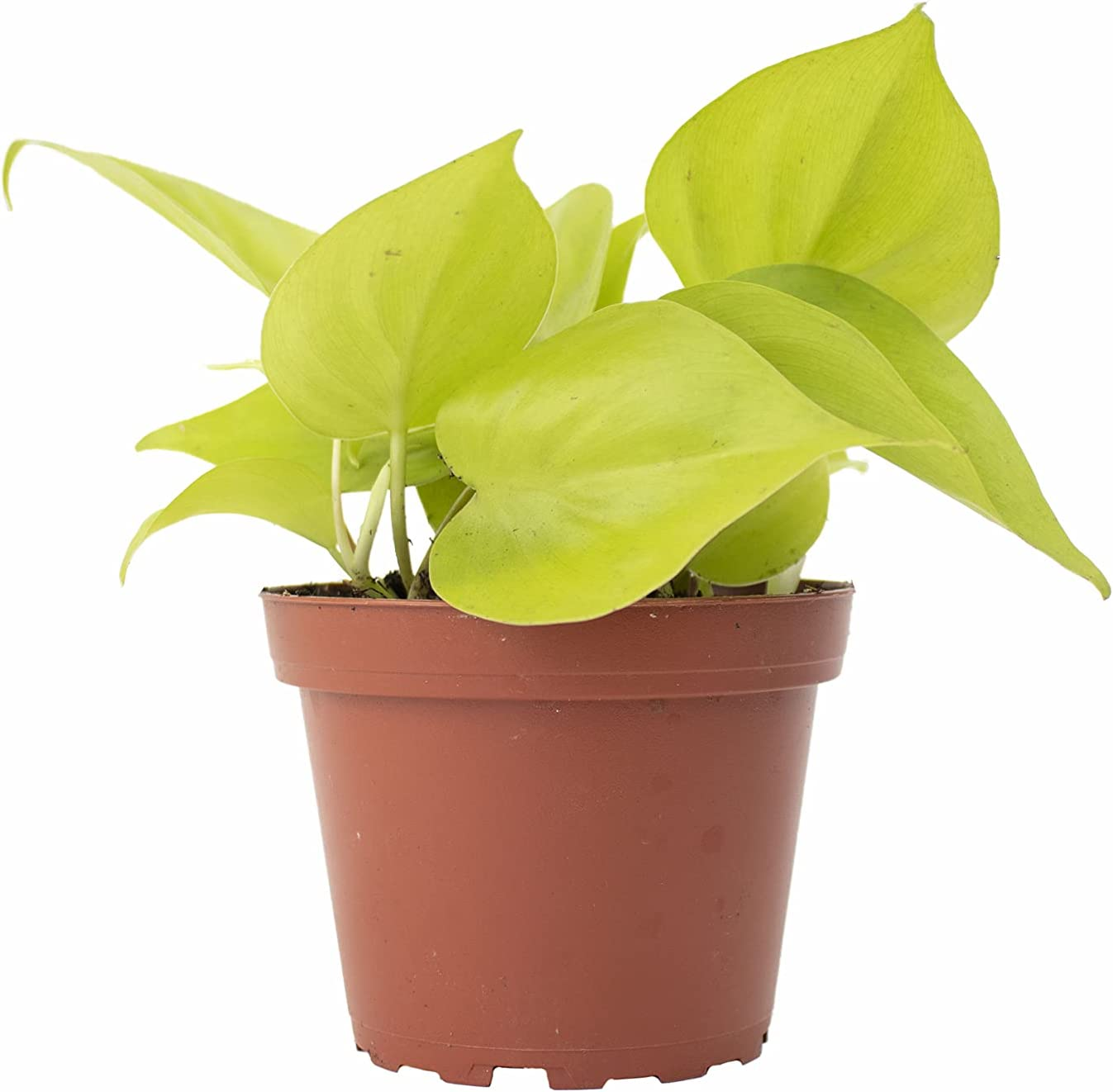 Shop Succulents Vining Collection Purifyi Air Hand Award-winning store Selected Sale SALE% OFF