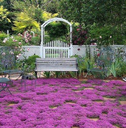 400 semillas de hierbas tomillo rastrero, Planta cubren la decoración de flores de jardín