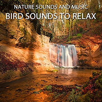 Bird Sounds to Relax