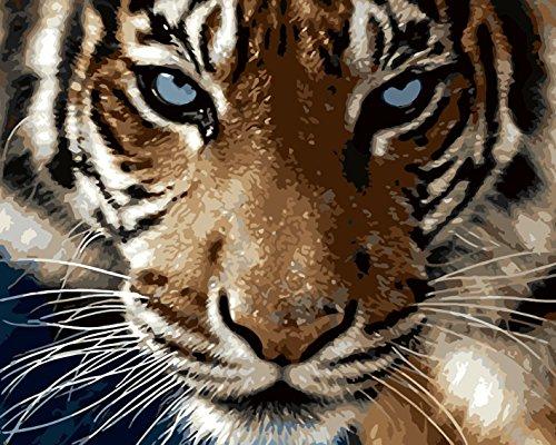 Fuumuui DIY preimpreso Lienzo Regalo de Pintura al óleo para Adultos niños Pintura por número Kits con Marco de Madera para la decoración casera -Tigre 16 * 20 Pulgadas