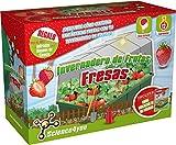 Science4you-Invernadero de Frutas-Fresas Juguete Educativo y Científico, (5600849488332)