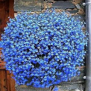 Garden Perennial Flowers Flowers Perennial Garden Blue Hanging Flower Seeds, Flax Seed Sowing Spring and Autumn Seasons, semillas de Flores for Home & Garden 100seeds a Bag