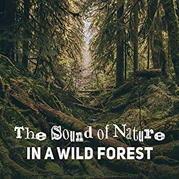 The Sound of Nature in a Wild Forest: Calming Melodies for Relaxation, Healing Music After Long Hard Day, Background Music for Relax Time