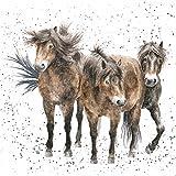 Tarjeta de felicitación artístico (wre2493)–Blank/cumpleaños–tres amigos–Exmoor ponis–país colección–Hannah Dale