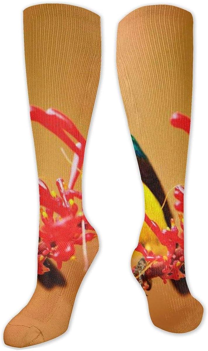 Hummingbird Blooming Branch Knee High Socks Leg Warmer Dresses Long Boot Stockings For Womens Cosplay Daily Wear