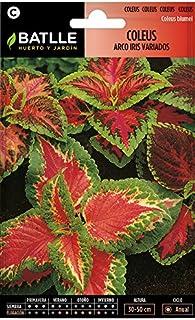 comprar comparacion Semillas de Flores - Coleus Arco Iris variado - Batlle