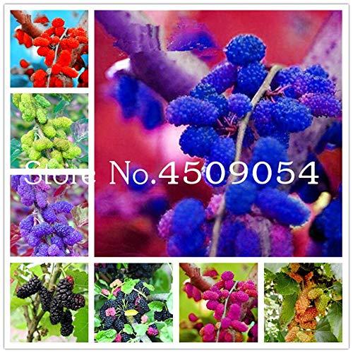 AGROBITS Des graines: 1000 Pcs Rare Rare Mul Bonsai Mul Arbre Exotic Plant Pakistan Fruit Bonsai Grand Super Sweet non-OGM des aliments pour le jardin: mix-1000pcs