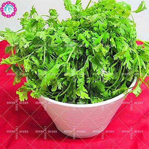 11.11 Big Promotion! 100 pcs/lot de graines de persil condiment semences de légumes verts dans le jardin et la maison aweet graines de plantes fraîches herbe annuelle 1