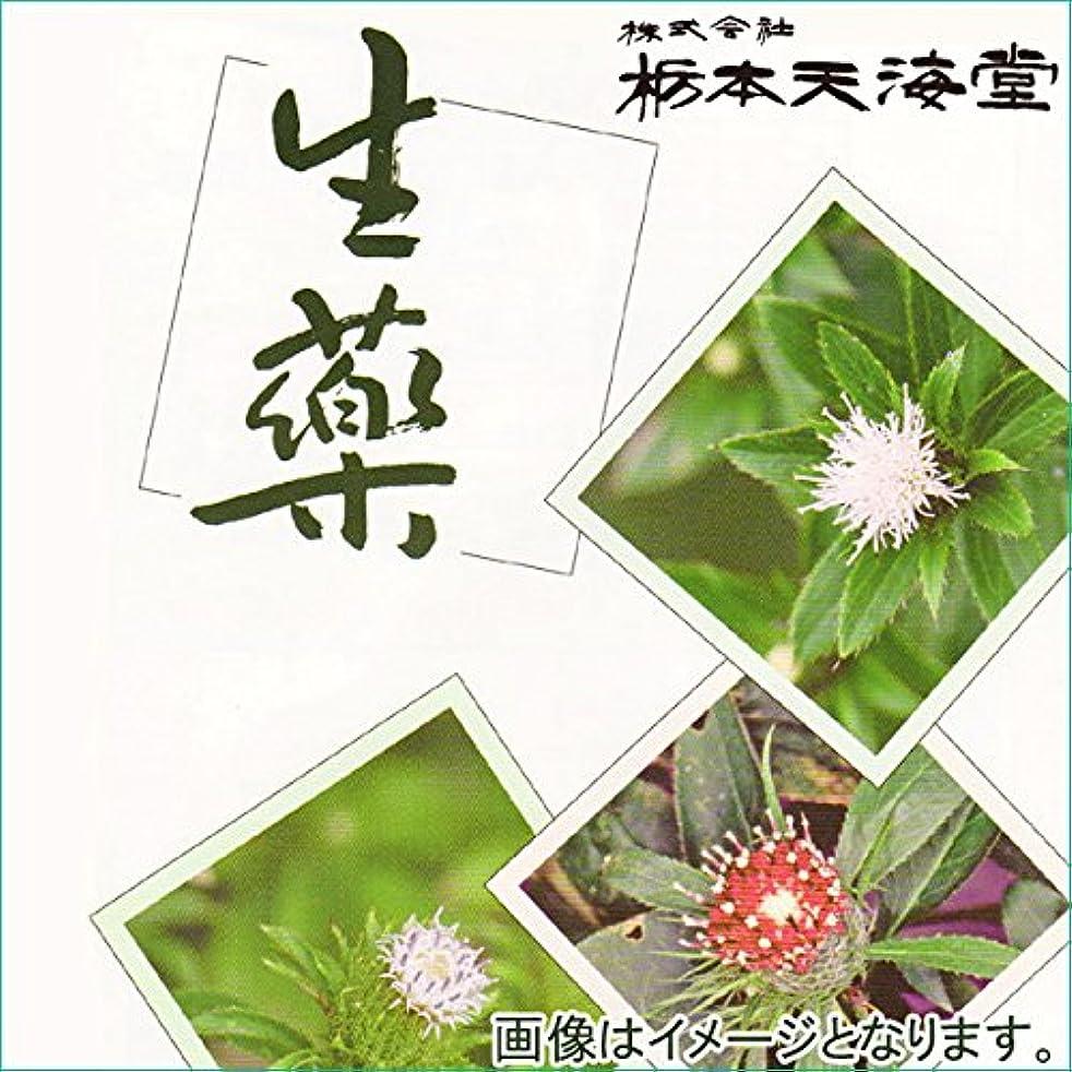 フルーツ遅れ種類海藻  (刻)[内容量:500g]ホンダワラ[原産国:日本]