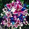 Vendita 100 PCS 24 colori semi del giglio, profumo a buon mercato Gigli Semi, raro fiore di colore giardino di piante - mescolando diverse varietà #1
