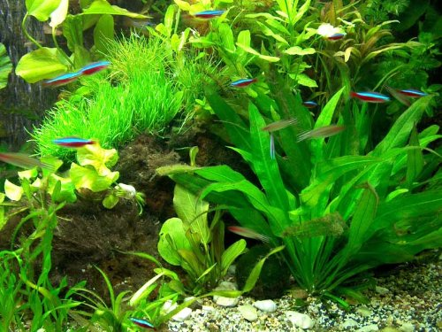 30 Aquarienpflanzen & 1000 ml Wasserflöhe (Daphnien), Wasserpflanzen