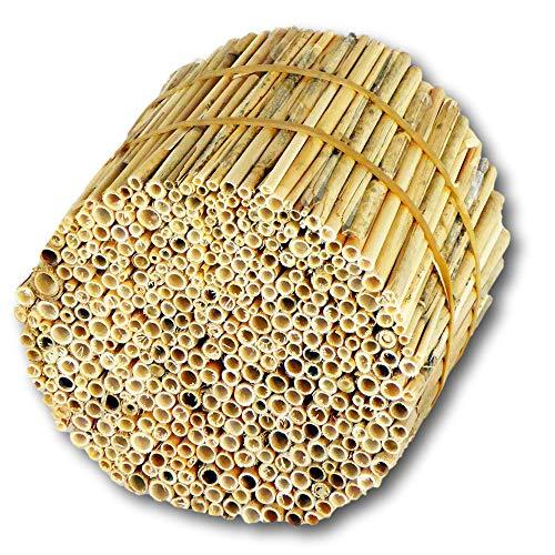 Hiss Reet® Schilfrohrhalme FEIN als Insektenhotel Füllmaterial I Ideal auch als Niströhren für Wildbienen, Bienenhotel geeignet I Verschiedene Längen (S - ca. 11 cm Länge)