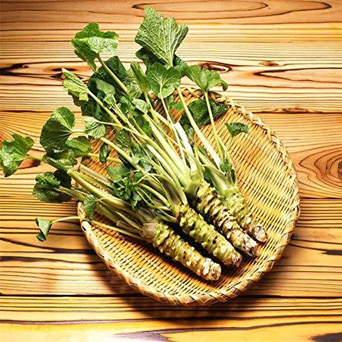 XIYAO 300PCS Gemüsesamen Senfkörner Hausgarten Bonsai Pflanzen
