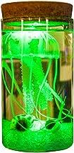 OMEM Seaweed Balls LED Jellyfish Bottles, Algae Moss Balls Seed Glass Jar Aquarium Terrarium Kit, Best Birthday Present (Have Remote Control, Green)
