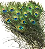 Natural Peacock Eye feathers- Having stunning colors of deep iridescent greens & brilliant blue, purples to make the striking EYE pattern in the center of the feathers tip. Natural Peacock Feather for Home Decor, Good Luck, Bookmark, Arts and Craft. ...