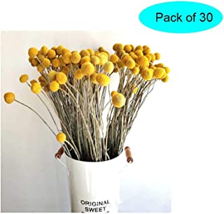 Cratone 30Pcs Dried Flowers Dried Real Natural Craspedia Flowers,Billy Button Balls Floral Bouquet Immortal Flower for DIY Home Wedding Party Photography Props Decor