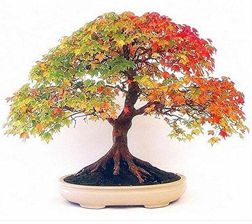 vente Big 100pcs / sac cymbidium orchidées, cymbidium jaune, cymbidium plante orchidée, bonsaï graines de fleurs, croissance naturelle, plantes pour la maison g