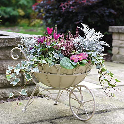 Attractive Cream Metal Wheelbarrow Planter Sturdy and Weatherproof Pre-Drainage Holes Interesting Garden Feature 1 x Cream Metal Wheelbarrow Planter by Thompson and Morgan (1)