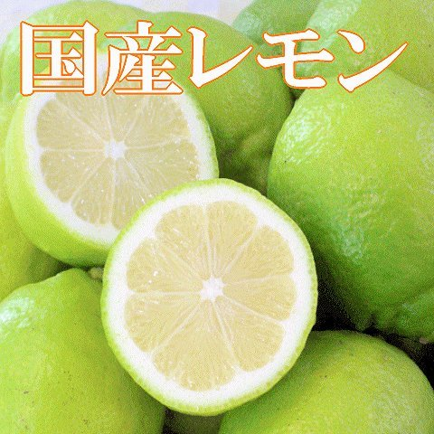 国産(和歌山県産)レモン/グリーンレモン 3kg 訳あり ノーワックス