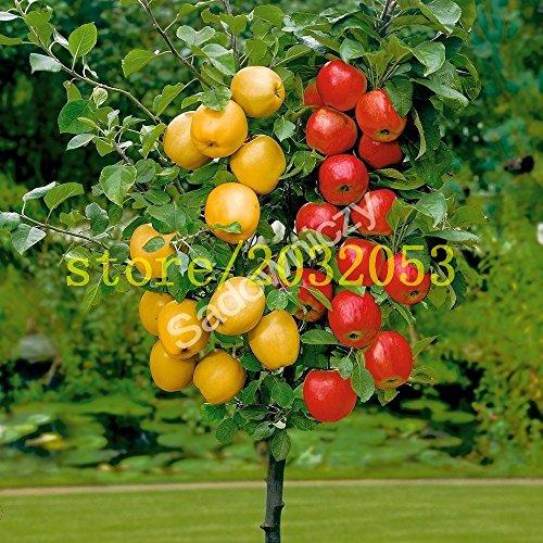 100 semillas de manzano enano árboles bonsai semillas de manzana MINI frutales para plantar jardín de su casa envían semillas de fresa grande como regalo