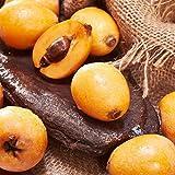 Aimado Seeds Garden-5 graines Néflier organic fruits graines rustique vivace fruits comestibles pour Jardin