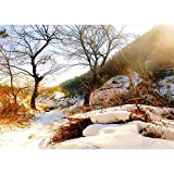 Fondo de fotografía Personalizado de Vinilo Prop Fairy taleFondo de fotografía A8 3x3m