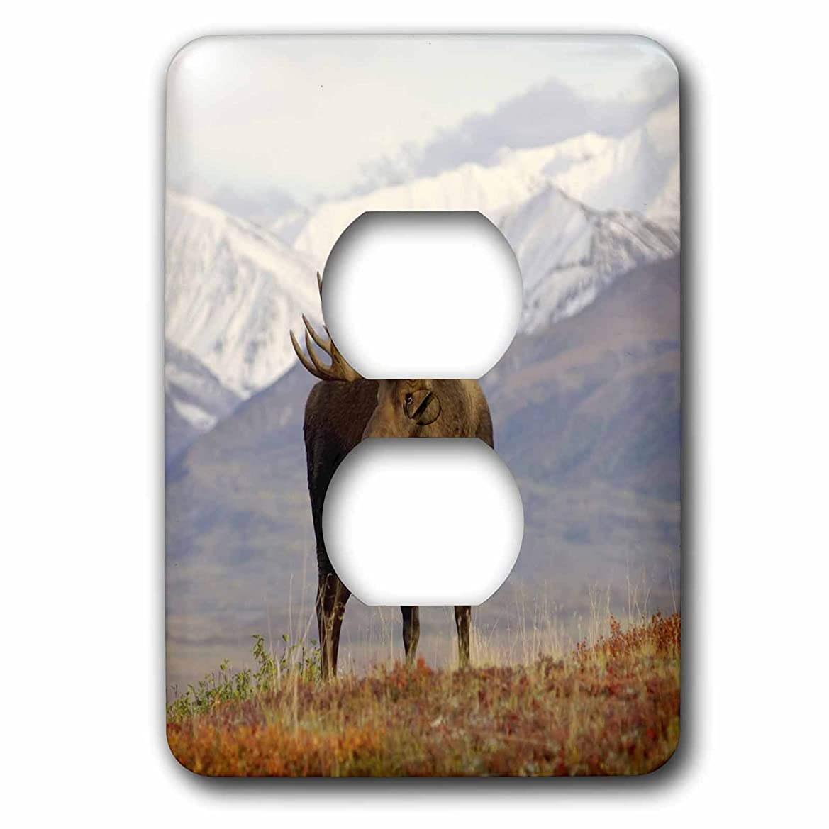 疼痛いらいらする反論者3drose LLC lsp _ 87701?_ 6?Moose bull野生生物、デナリ国立公園、アラスカus02?ska3065?Steve Kazlowski 2プラグコンセントカバー