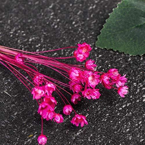 CHENTAOCS 20Pcs Gradient natürliche getrocknete Blumen-Blumenstrauß-Hochzeit Ostern Kaninchen Schwanz Gras Mutter Tages Echt Blumen (Farbe : Champagne)