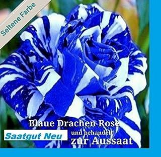 20x azul Dragón Rosa blanco - azul Rayas Semillas Planta Rareza Flores Rosas #112