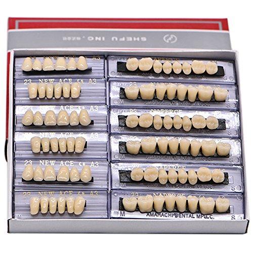 Angzhili Dental Synthetic Acrylic Resin False Teeth for Halloween Horror Teeth Denture Teeth Sets Shade A3 Upper And Lower Acrylic Teeth Sets(168pcs)