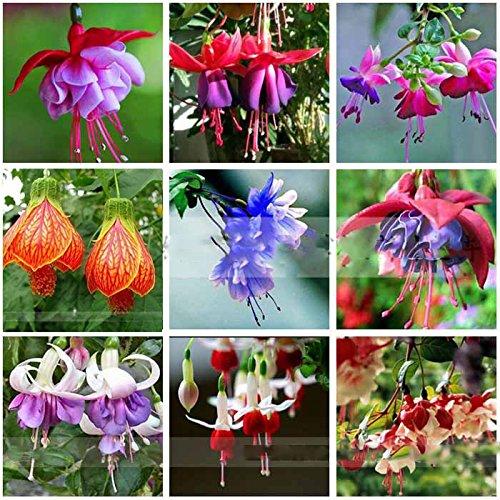 ADB Inc 100 Fuchsia Seeds, Bonsai Hanging Flowers F.alba Coccinnea DIY Planting Flowers (Fuchsia 03 Mix)