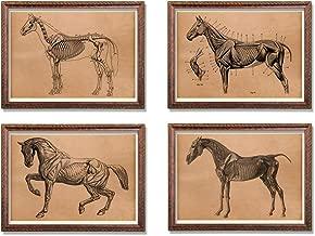 Vintage Skeleton print Medical poster Horse anatomy illustration Vintage animal decor Set of 4 prints