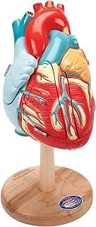 Denoyer 0140-00 Geppert - Figura decorativa de corazón de A