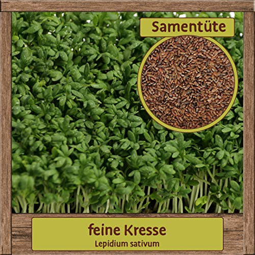 4000 Hochwertige Kresse-Samen essbare Garten-Kresse Saatgut Lepidium sativum feinblättrig mit hoher Keimfähigkeit