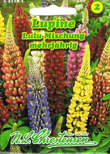 Lupine Lulu Mischung Lupinus polyphyllus mehrjährig Staude