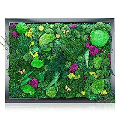 "Natural Plant Wall Art Real Plants and Moss Decorations (18"" x 24"") - Indoor Moss Backdrop With Exotic French Moss And Ferns - Green Decor To Bring Nature Into Your Home And Work Space - Office Plants by Simple Awesome Stuff"