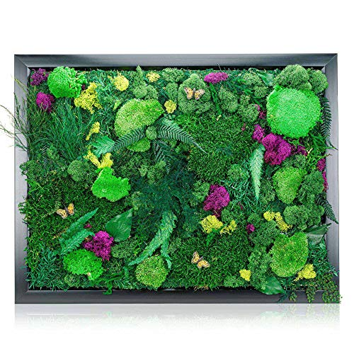 """Natural Plant Wall Art Real Plants and Moss Decorations (18"""" x 24"""") - Indoor Moss Backdrop With Exotic French Moss And Ferns - Green Decor To Bring Nature Into Your Home And Work Space - Office Plants"""