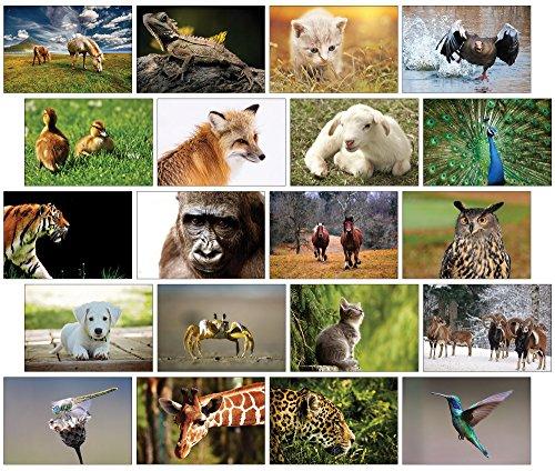 Tiere Postkarten - 20 verschiedene Tierpostkarten-set ideal für Sammler und Postcrossing