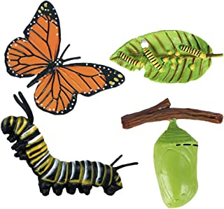 Fenteer 1 Set Butterfly Life Cycle Stages Classroom Teaching Accessories Educational Toy for Kids Student Friends Teacher