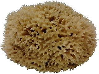 Small Natural Sponge