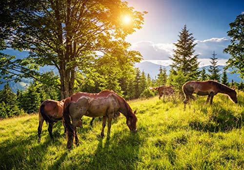 wandmotiv24 Fototapete Wiese mit Pferden, S 200 x 140cm - 4 Teile, Fototapeten, Wandbild, Motivtapeten, Vlies-Tapeten, Herde, Wald, Himmel M5727