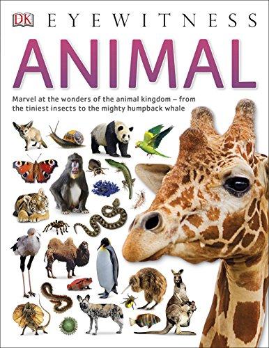 Animal (DK Eyewitness)