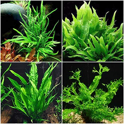 15 Best Low Light Plants For Low Tech Planted Aquarium