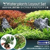 (水草)おまかせ水上葉 レイアウトセット 60cm水槽用 8種 +ライフマルチ アヌビアスナナ(1個)