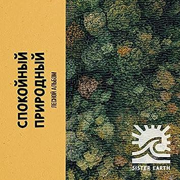 Спокойный Природный Лесной Альбом