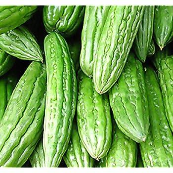 Balsam Pear Seed Bitter Melon Organic Vegetable 1 Pack 10g Seeds Brand