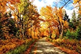 Autumn Road in New Hampshire Photo Photograph Cool Wall Decor Art Print Poster 36x24