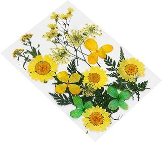 EXCEART 20 Pcs Vraies Fleurs Pressées Séchées Bricolage Fleurs Séchées Matériaux Fleur Séchée pour Résine Époxy (Jaune)