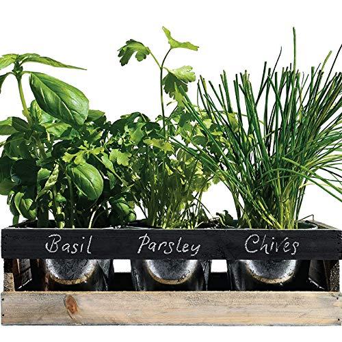 Jardín de Hierbas Interior de Viridescent - Caja de madera jardinera para alfeizar de cocina - El kit contiene todo lo que necesita para cultivar sus propias hierbas frescas. El regalo perfecto